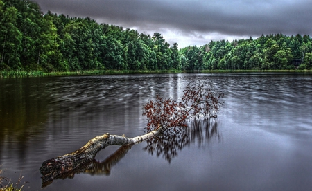 A Gray Day - image, high dynamic range, background, breeze, nice, multicolor, wallpaper, creeks, bright, paisage, wood, art, brightness, pacific, white, red, breathing, beautiful, artwork, leaves, roots, green, scenery, blue, lakes, silence, maroon, paisagem, air, hdr, nature, desktop, reflected, branches, pc, scene, clouds, cenario, calm, scenario, beauty, forests, rivers, widescreen, paysage, cena, trees, sky, panorama, water, cool, serenity, awesome, computer, photoshop, landscape, colorful, brown, gray, trunks, picture, photography, grove, mirror, tranquility, amazing, photo, calmness, multi-coloured, view, colors, leaf, serene, plants, peaceful, colours, reflections, natural