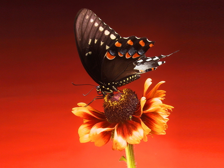 Butterfly on flower - red, beautiful, butterfly, nature, flower
