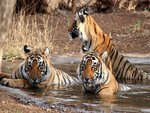 RANTHAMBORE NATIONAL PARK-INDIA