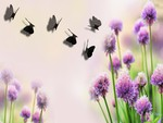 Purple Clover and Shadow Butterflies