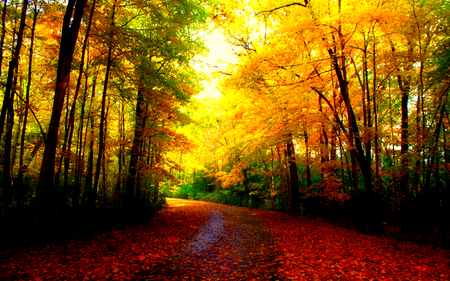 Beautiful Autumn Forests Nature Background Wallpapers On
