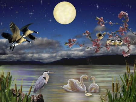 MOONLIGHT SERENADE - colorful, ducks, beautiful, moon, splendor, love, color, beauty, animals, night, romance, birds, lake, fullmoon, water, peaceful, landscape