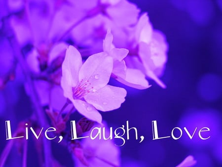 Live, Laugh, Love - flowers, live, laugh, love