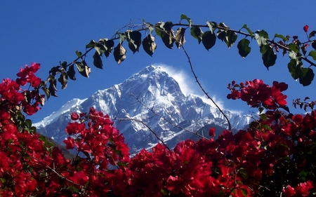 Himalaya in Nepal - zen, religious, spiritual, mountain, nice, flowers, beauty, mystical, himalayas, widescreen, wind, sky, forces of nature, trees, cool, snow, mountains, himalaya, awesome, great, white, red, dreamy, beautiful, cold, picture, mystic, photography, calming, hot, light, other, blue, gorgeous, tranquility, amazing, romantic, india, peace, spirit, nepal, tree, flower, peaceful, nature