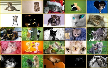 PC Chastuces - beauty, collages, colorful, cool, flowers, chat, animal, animals, adorable, white, sweetheart, picture, pretty, kitten, red, beautiful, cat, wide eyes, amazing, heart, color, gato, cat face, dream, face, purple, pets, calico, orange, colors, whiskers, lovely, love, sweet, christmas, yellow, blue, dark, great, black, kitty, awesome, pet, colored, green, cute, other, grey, merry christmas, dreamy, cats, pink, collage, beautiful eyes, kittens, fantasy, chats, nice, dreams, eyes, flower, brown, photography, spirit