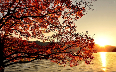 LAST SUNRISE  of AUTUMN - tree, autumn, sunrise, lake