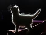 cute white shadow