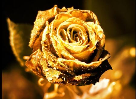 Magical Golden Rose