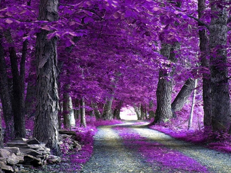 Purple-Forest - beautiful, forest, purple, picture, trees