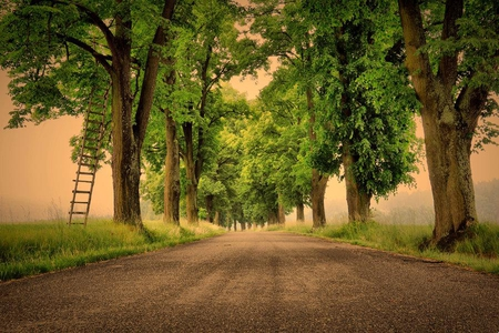 Tree Picking - ladder, leaves, road, trees