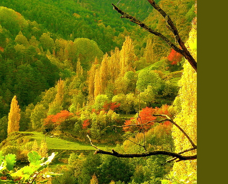 October hillside - autumn, hills, orange, colors, green, gold, trees, yellow