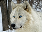 ARTIC BEAUTY