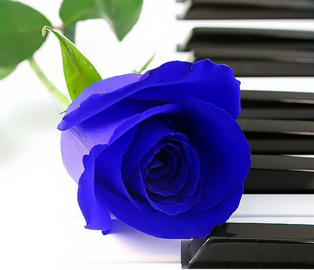The Pianos Rose
