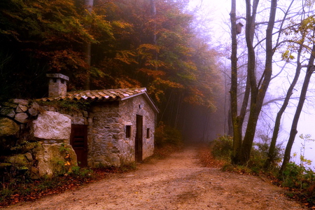 House near the river - house, trees, fog, mist, nice view, stones, plants, lovely place, path, river