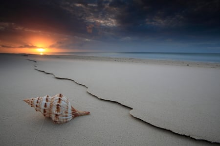 The Shell - beach, seashell, sand, shell, sunsets, nature