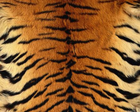 Animal Patterns Textures Abstract Background Wallpapers On Gorgeous Animals With Patterns