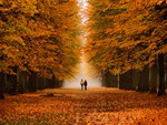 Autumn walk