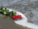 Roses in the Ocean