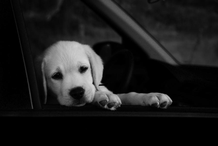 WAITING ... - cute, photography, bw, animals, puppy, dog