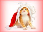 Have a purrrfect Christmas