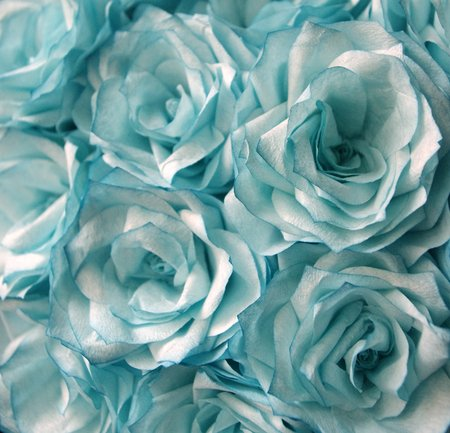 Beautiful Light Blue Colored Roses Flowers Nature Background