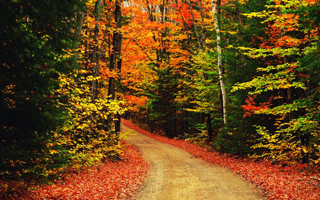 The Autumn Scenic Scene Forests Nature Background