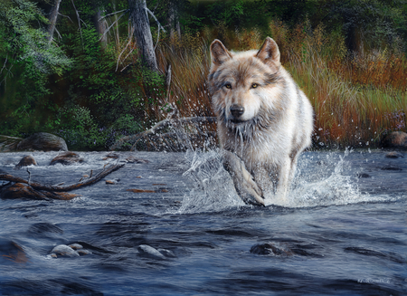 the wild wild wolf - Dogs & Animals Background Wallpapers on Desktop Nexus (Image 868097)