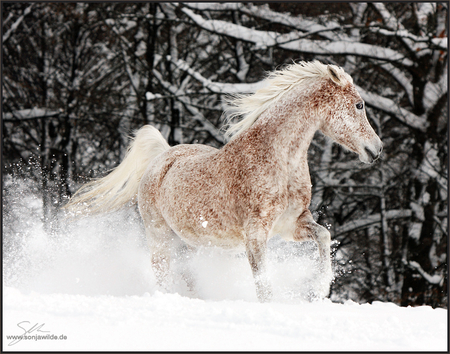 Snow Horse Horses Animals Background Wallpapers On