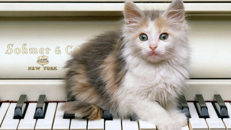 PLAYING PIANO - piano, kitten, feline, cute