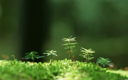 the life of little trees - tree, green, life, grass, small