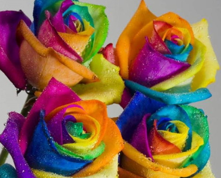 Comments On MULTI COLOURED ROSES