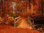 Small autumn bridge