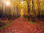Autumn-HDR