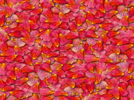Pink Petals - flowers, nature, abstract, other
