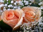 Peachy-Keen-Jelly Bean Roses...