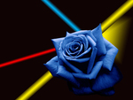 For Separation Day