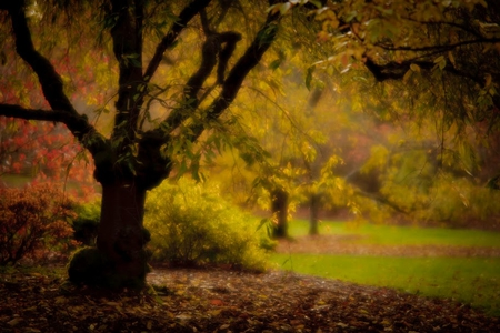 Romantic Forests Amp Nature Background Wallpapers On