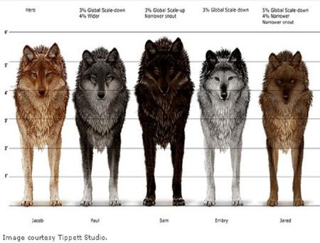 Wolf Pack Movies Entertainment Background Wallpapers On Desktop Nexus Image 876444