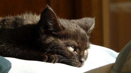 Relaxed Kitten
