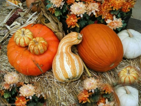 Thanksgiving - flowers, still life, fall, pumpkins