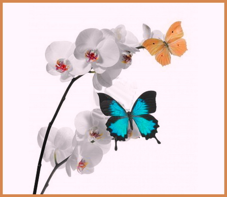 Orchids and butterflies - orchids, orange, blue and black, flowers, butterflies, white