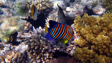 COLORFUL FISH - colorful, fish, animals, sea