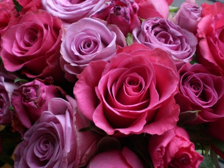 Lovely pink shaded roses flowers nature background wallpapers lovely pink shaded roses mightylinksfo