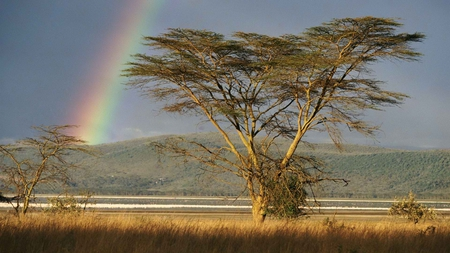 desert rainbow - beauty, desert, photography, colorful, sky, rainbow, nature, tree