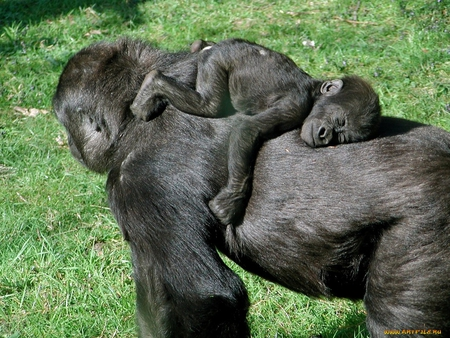 Mother's love - monkey, primate, grass, love, mom, mother