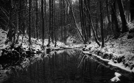 dark winter forest winter nature background wallpapers on