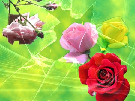 Bunga Mawar - rose, glass, roses, green, pink rose, red rose, yellow rose