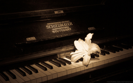 OLD PIANO - beauty, photography, music, bw, piano, sepia, flower