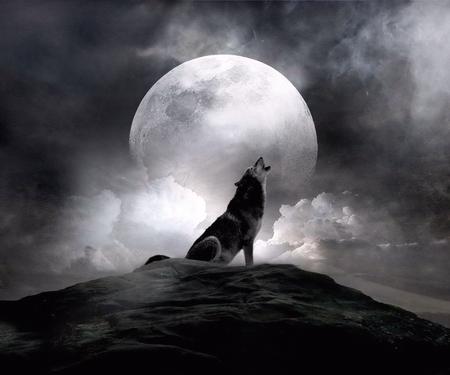moon_wolf - animal, wolf, moon, night, dog, 3d