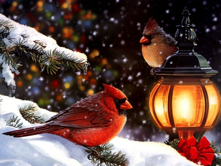 Christmas Cardinals Images.Christmas Cardinals Birds Animals Background Wallpapers